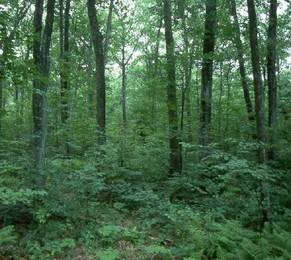 Temperate Forests - BIOMES